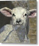 Spring Lamb Metal Print by John Reynolds