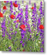 Spring Meadow With Wild Flowers Metal Print