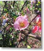 Springtime In The South Metal Print