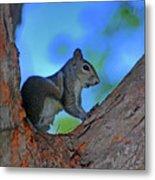 1- Squirrel Metal Print