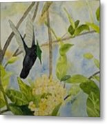 St. Lucian Hummingbird Metal Print