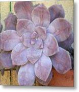 Stone Flower Metal Print