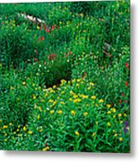 Stream And Alpine Flowers, Ouray Metal Print