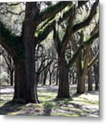 Strong Trees In The South Metal Print