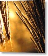 Sun Grass Wind Metal Print