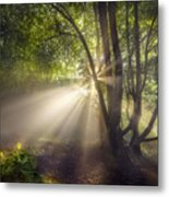 Sunbeam Metal Print