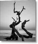 Sunrise On Driftwood In Black And White Metal Print