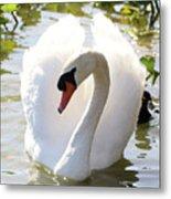 Sweet Swan 2 Metal Print