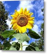 Tall And Sunny Metal Print