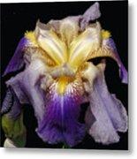 Tall Bearded Iris Metal Print