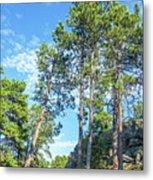Tall Pine Trees Metal Print