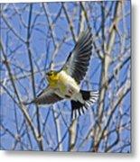 The American Goldfinch In-flight, Metal Print