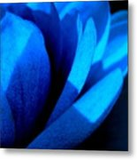 The Blue Lilly Metal Print by Catherine Natalia  Roche