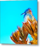The Cactus Wren Metal Print