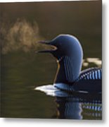 The Call Of The Loon Metal Print