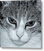 The Cat's Innocense Metal Print