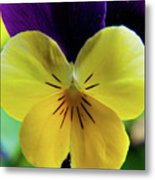 The Face Of A Pansy Metal Print