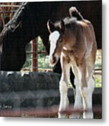 The Flying Colt With The Big White Feet Metal Print