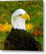 The Great Bald Eagle Metal Print
