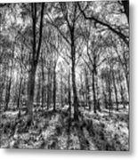 The Monochrome Forest Metal Print