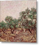 The Olive Pickers Metal Print