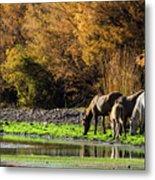 The Salt River Wild Horses  Metal Print