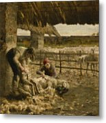 The Sheepshearing Metal Print