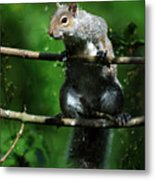 The Squirrel From Fairyland Metal Print