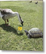 The Turtle And The Goose Metal Print