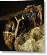 The Wasp Metal Print
