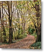 The Woods In Autumn Metal Print