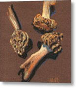 Three Morels Metal Print