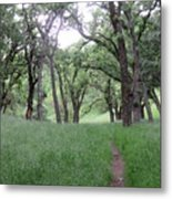 Through The Meadow Metal Print