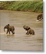 Tiny Elephants Metal Print