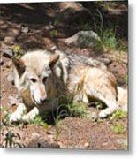 Tour Of Rocky Mountain Wildlife Foundation Metal Print