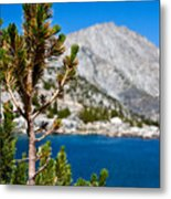 Treasured Pine Metal Print