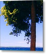 Tree By The Lake 3 Metal Print