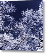 Tree Fantasy 17 Metal Print