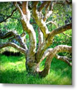 Tree In Golden Gate Park Metal Print