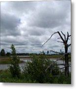 Tree In The Wetland Metal Print