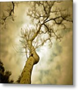 Tree Top In The Clouds Metal Print
