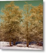 Trees In Oregon Winter Metal Print