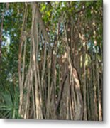 Trees With Aerial Roots At The Coba Ruins  Metal Print