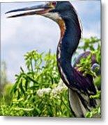 Tri-colored Heron Metal Print