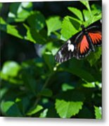 Tropical Butterfly Metal Print
