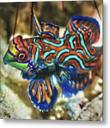 Tropical Fish Mandarinfish Metal Print