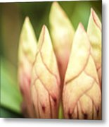 Tropical Garden 7 Metal Print