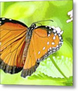 Tropical Queen Butterfly Framing Image Metal Print