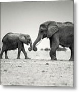 Trunk Pumping Elephants Metal Print