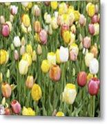 Tulip Garden Metal Print